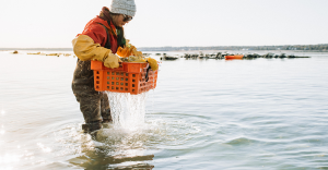Orange oyster crate pulled out of the bay.